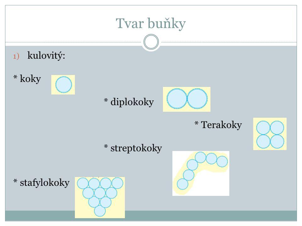 Tvar buňky kulovitý: * koky * diplokoky * Terakoky * streptokoky