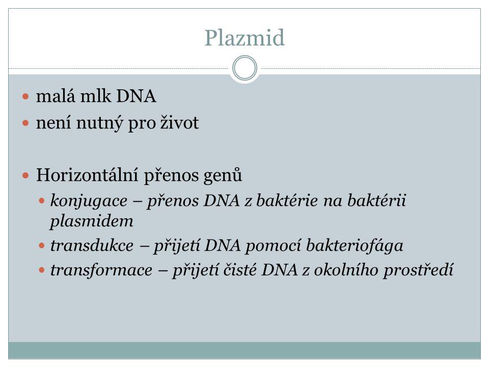 Plazmid malá mlk DNA není nutný pro život Horizontální přenos genů