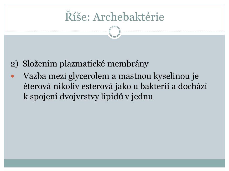 Říše: Archebaktérie 2) Složením plazmatické membrány