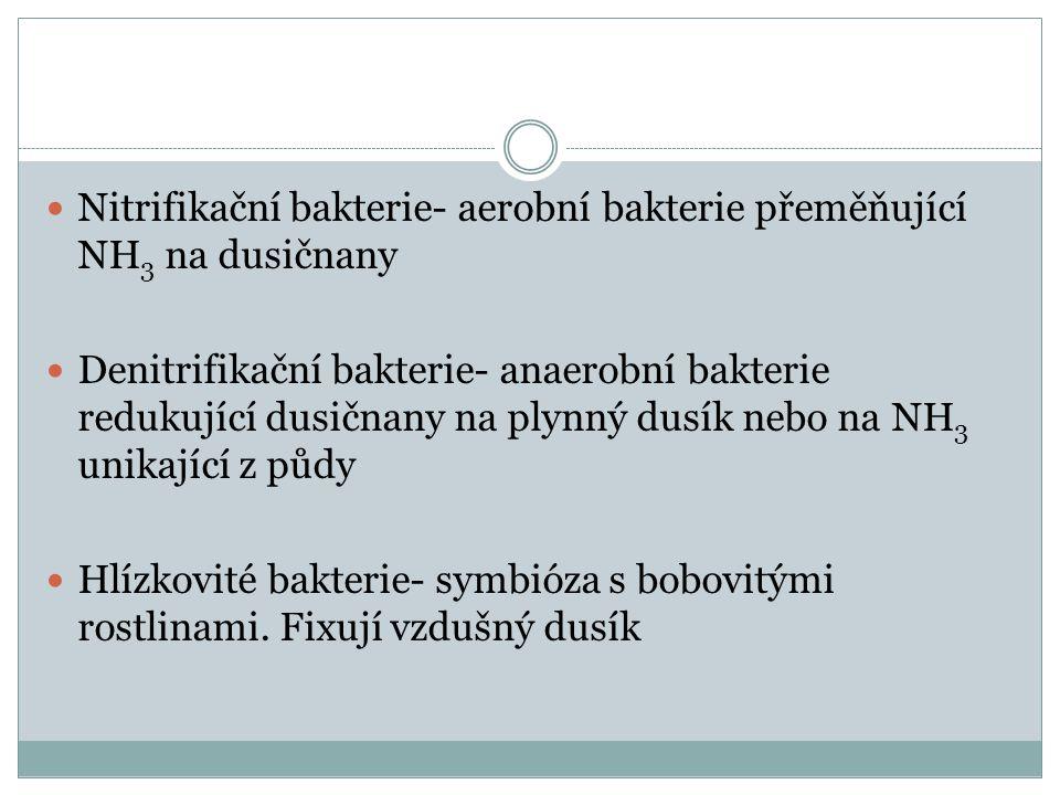Nitrifikační bakterie- aerobní bakterie přeměňující NH3 na dusičnany