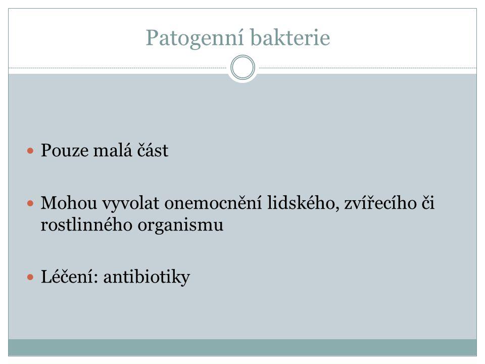 Patogenní bakterie Pouze malá část
