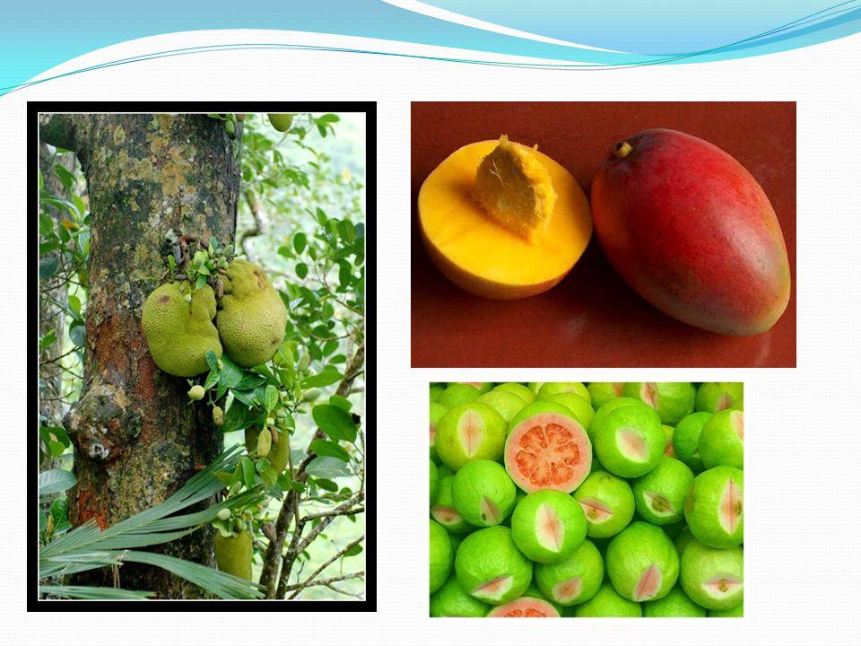 Chlebovník, mango, guava,