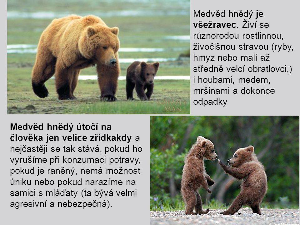 Medvěd hnědý je všežravec