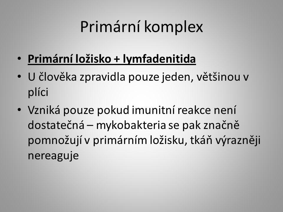 Primární komplex Primární ložisko + lymfadenitida