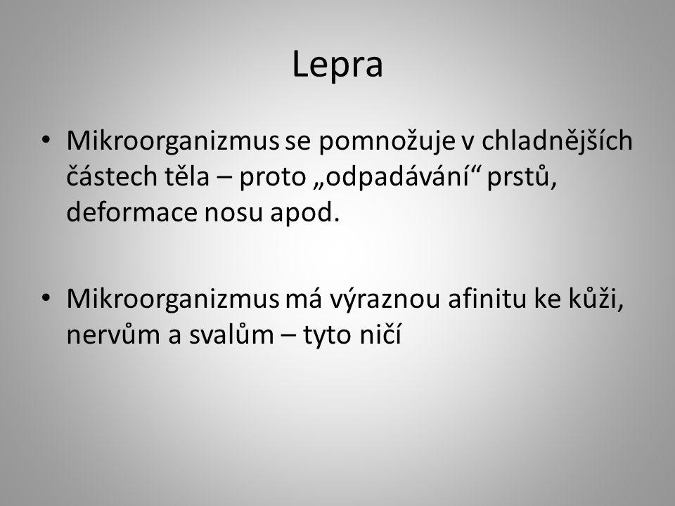 """Lepra Mikroorganizmus se pomnožuje v chladnějších částech těla – proto """"odpadávání prstů, deformace nosu apod."""