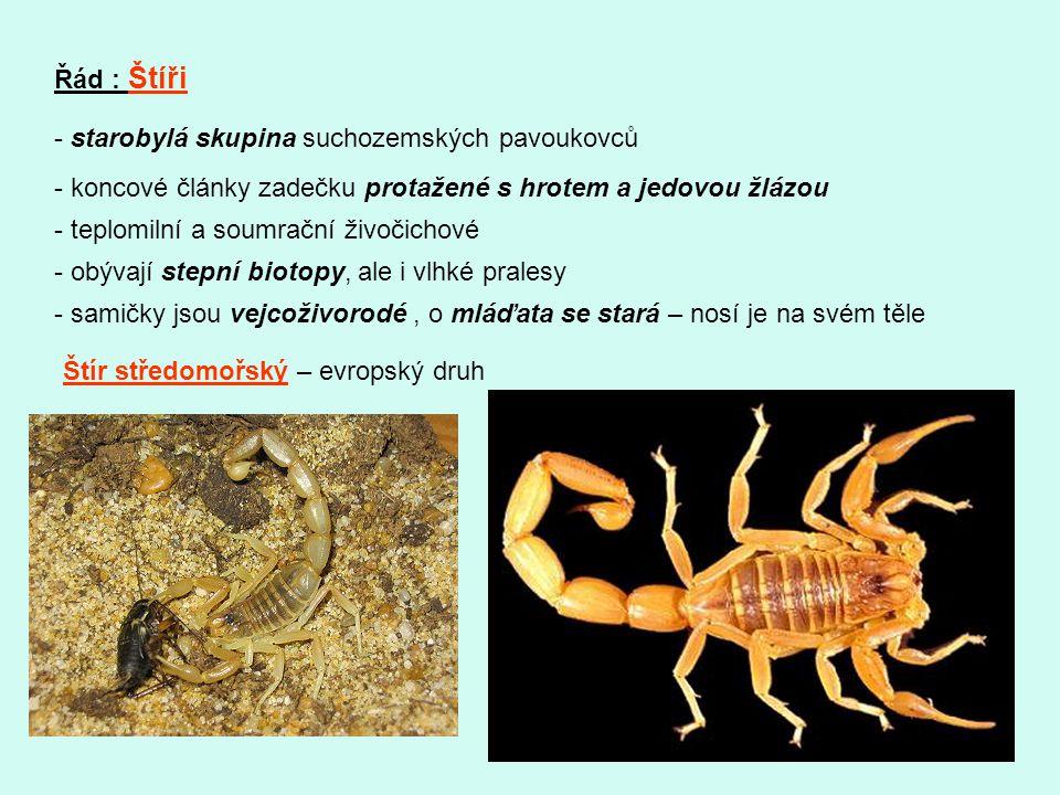 Řád : Štíři - starobylá skupina suchozemských pavoukovců. - koncové články zadečku protažené s hrotem a jedovou žlázou.