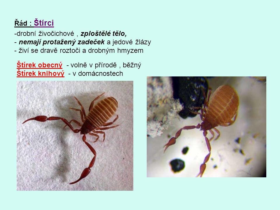 Řád : Štírci drobní živočichové , zploštělé tělo, nemají protažený zadeček a jedové žlázy. živí se dravě roztoči a drobným hmyzem.