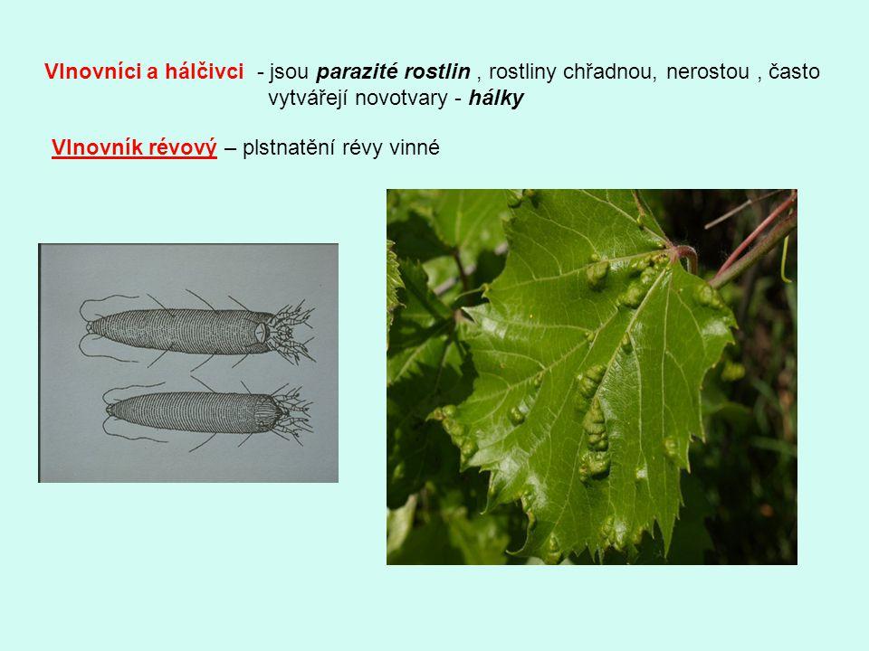 Vlnovníci a hálčivci - jsou parazité rostlin , rostliny chřadnou, nerostou , často