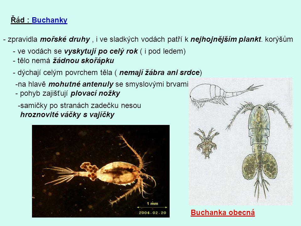 Řád : Buchanky - zpravidla mořské druhy , i ve sladkých vodách patří k nejhojnějším plankt. korýšům.
