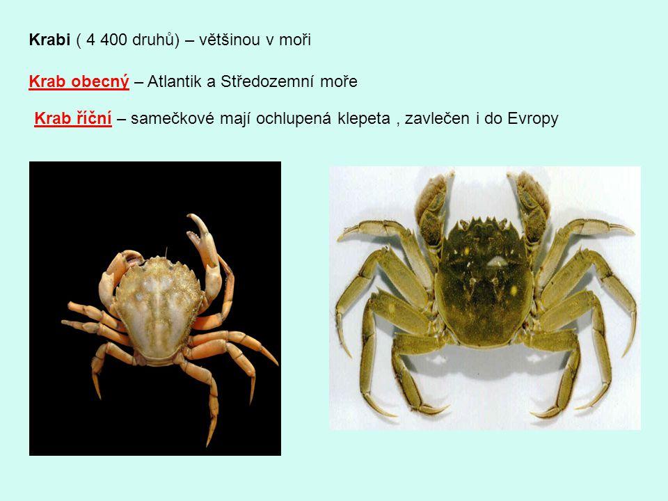 Krabi ( 4 400 druhů) – většinou v moři