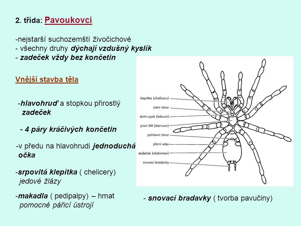 2. třída: Pavoukovci nejstarší suchozemští živočichové. všechny druhy dýchají vzdušný kyslík. zadeček vždy bez končetin.