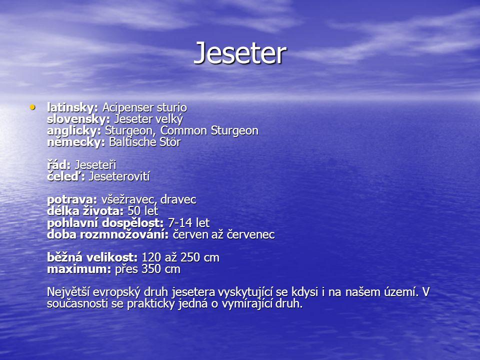 Jeseter