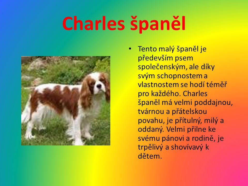 Charles španěl