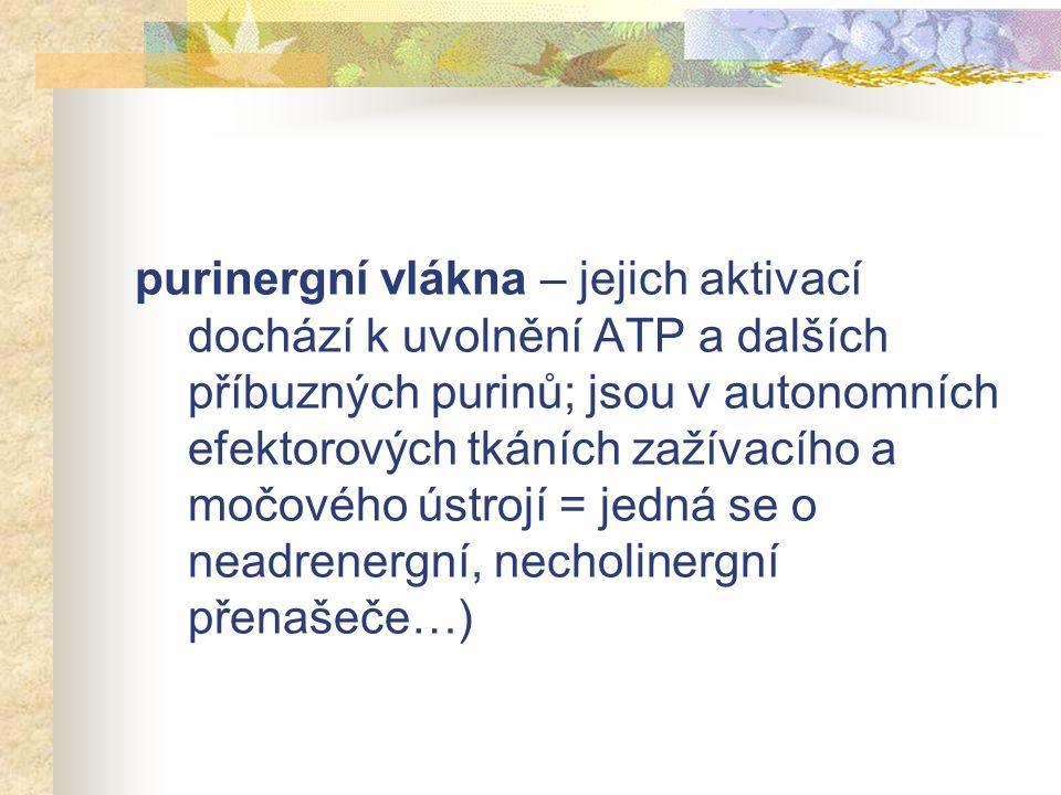 purinergní vlákna – jejich aktivací dochází k uvolnění ATP a dalších příbuzných purinů; jsou v autonomních efektorových tkáních zažívacího a močového ústrojí = jedná se o neadrenergní, necholinergní přenašeče…)