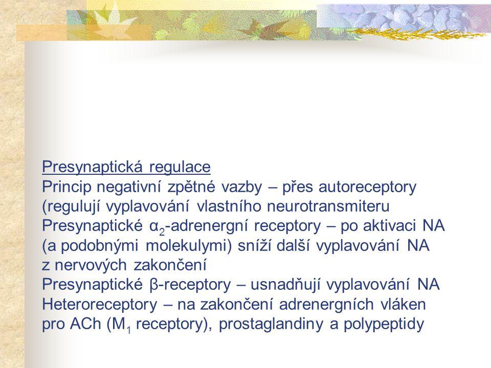 Presynaptická regulace Princip negativní zpětné vazby – přes autoreceptory (regulují vyplavování vlastního neurotransmiteru Presynaptické α2-adrenergní receptory – po aktivaci NA (a podobnými molekulymi) sníží další vyplavování NA z nervových zakončení Presynaptické β-receptory – usnadňují vyplavování NA Heteroreceptory – na zakončení adrenergních vláken pro ACh (M1 receptory), prostaglandiny a polypeptidy