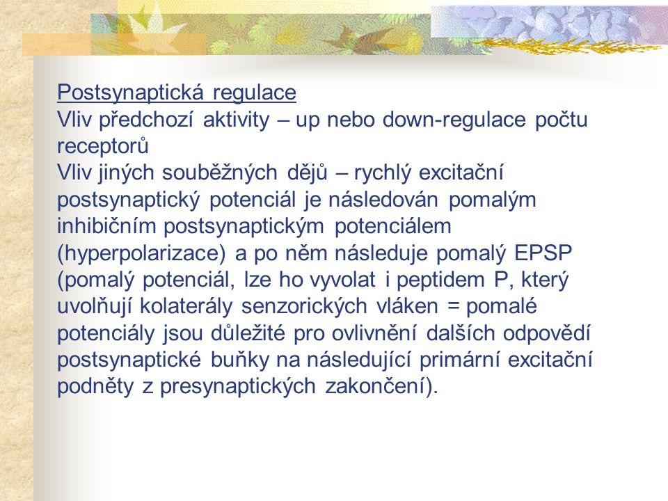 Postsynaptická regulace Vliv předchozí aktivity – up nebo down-regulace počtu receptorů Vliv jiných souběžných dějů – rychlý excitační postsynaptický potenciál je následován pomalým inhibičním postsynaptickým potenciálem (hyperpolarizace) a po něm následuje pomalý EPSP (pomalý potenciál, lze ho vyvolat i peptidem P, který uvolňují kolaterály senzorických vláken = pomalé potenciály jsou důležité pro ovlivnění dalších odpovědí postsynaptické buňky na následující primární excitační podněty z presynaptických zakončení).