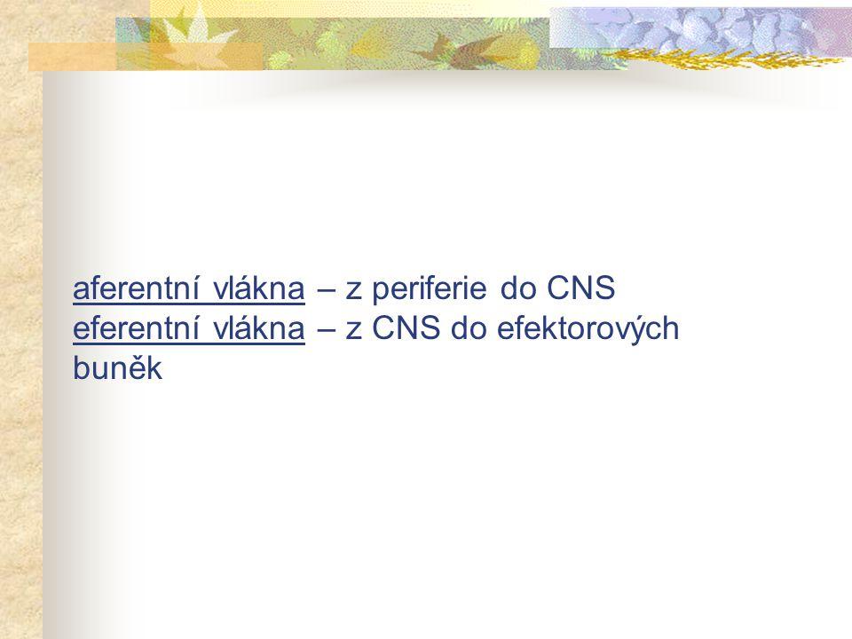 aferentní vlákna – z periferie do CNS eferentní vlákna – z CNS do efektorových buněk