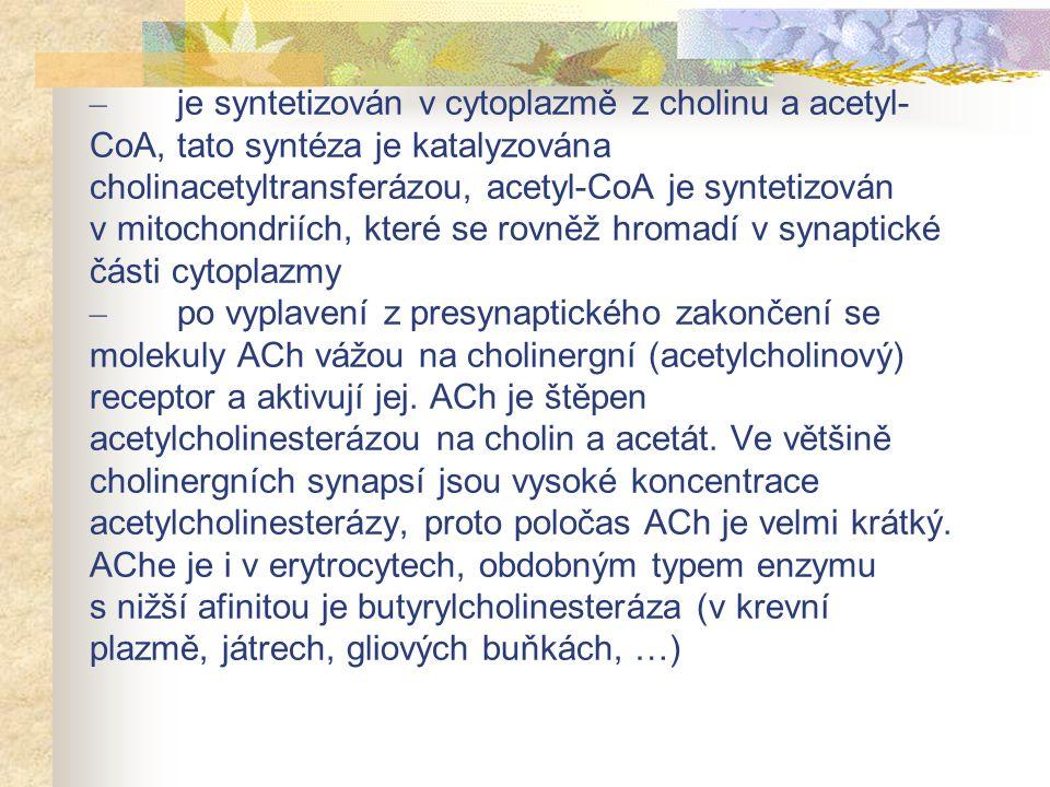 – je syntetizován v cytoplazmě z cholinu a acetyl-CoA, tato syntéza je katalyzována cholinacetyltransferázou, acetyl-CoA je syntetizován v mitochondriích, které se rovněž hromadí v synaptické části cytoplazmy – po vyplavení z presynaptického zakončení se molekuly ACh vážou na cholinergní (acetylcholinový) receptor a aktivují jej.