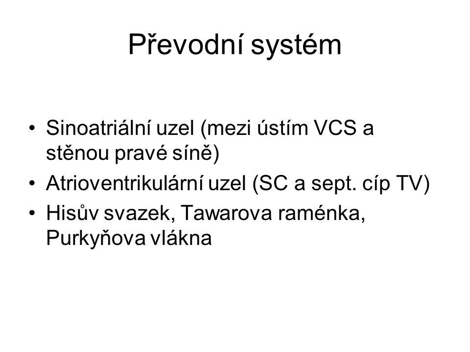 Převodní systém Sinoatriální uzel (mezi ústím VCS a stěnou pravé síně)
