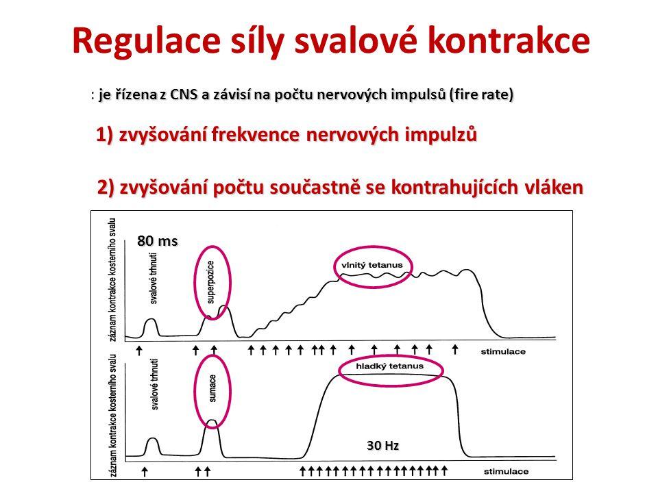 Regulace síly svalové kontrakce