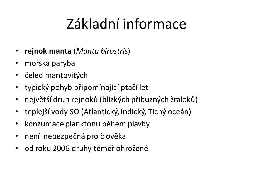 Základní informace rejnok manta (Manta birostris) mořská paryba