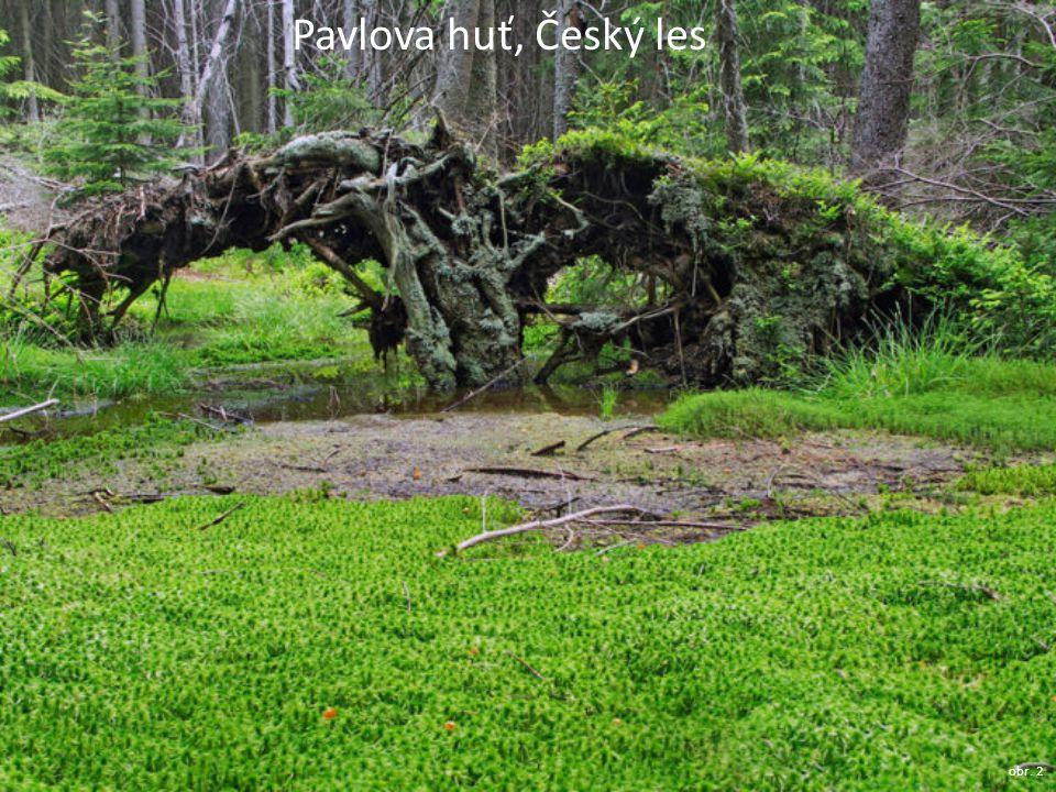 Pavlova huť, Český les obr. 2