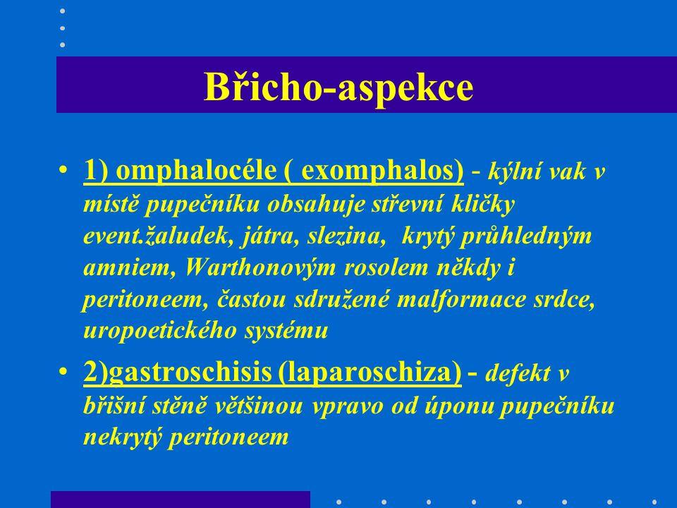 Břicho-aspekce