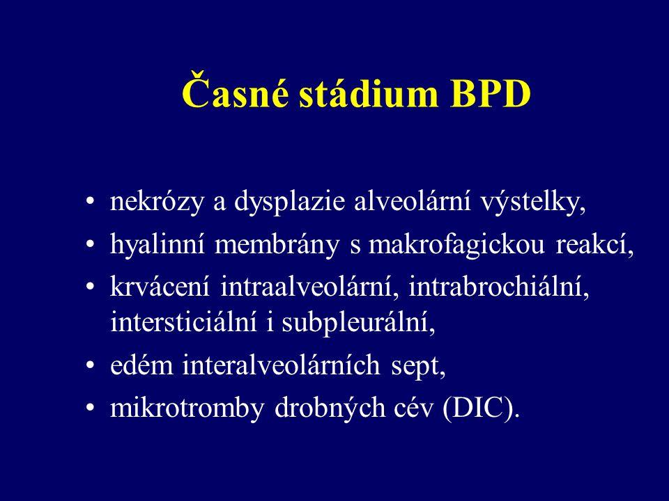 Časné stádium BPD nekrózy a dysplazie alveolární výstelky,