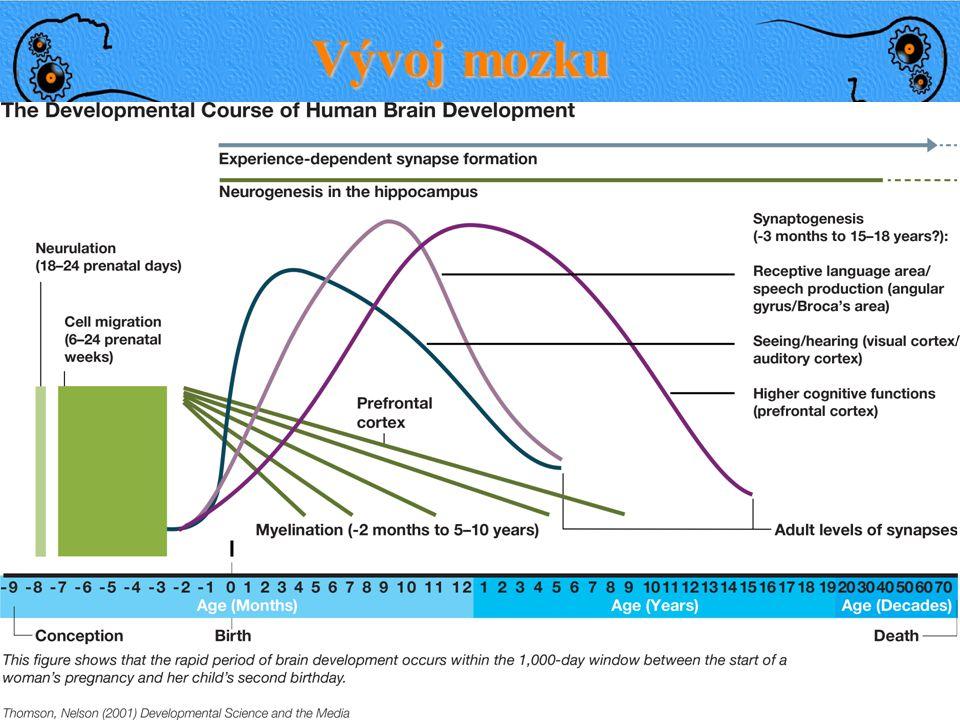 Vývoj mozku Prenatal Novorozenec 3 roky 1 mld neuronů