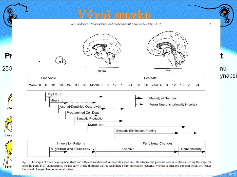 Vývoj mozku Prenatal Novorozenec 3 roky Dospělost Kojení - myelin