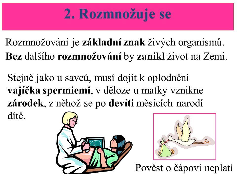 2. Rozmnožuje se Rozmnožování je základní znak živých organismů.