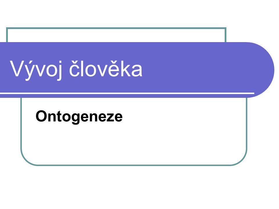Vývoj člověka Ontogeneze