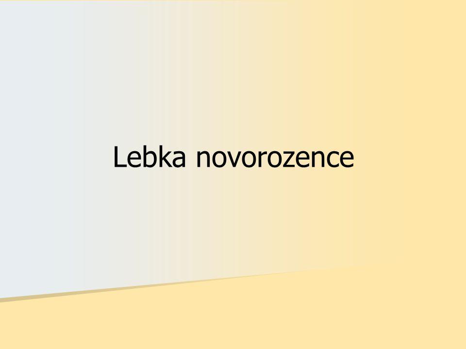 Lebka novorozence