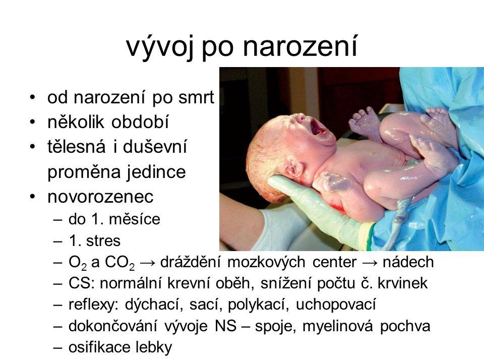 vývoj po narození od narození po smrt několik období tělesná i duševní