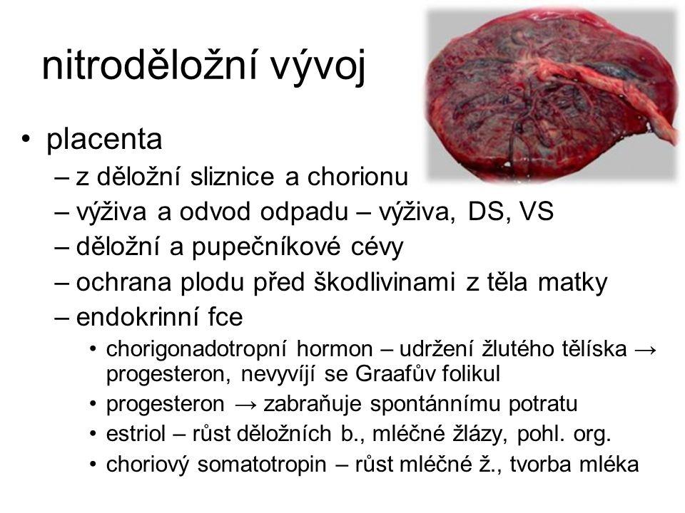 nitroděložní vývoj placenta z děložní sliznice a chorionu