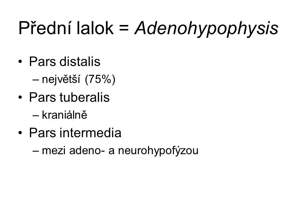 Přední lalok = Adenohypophysis