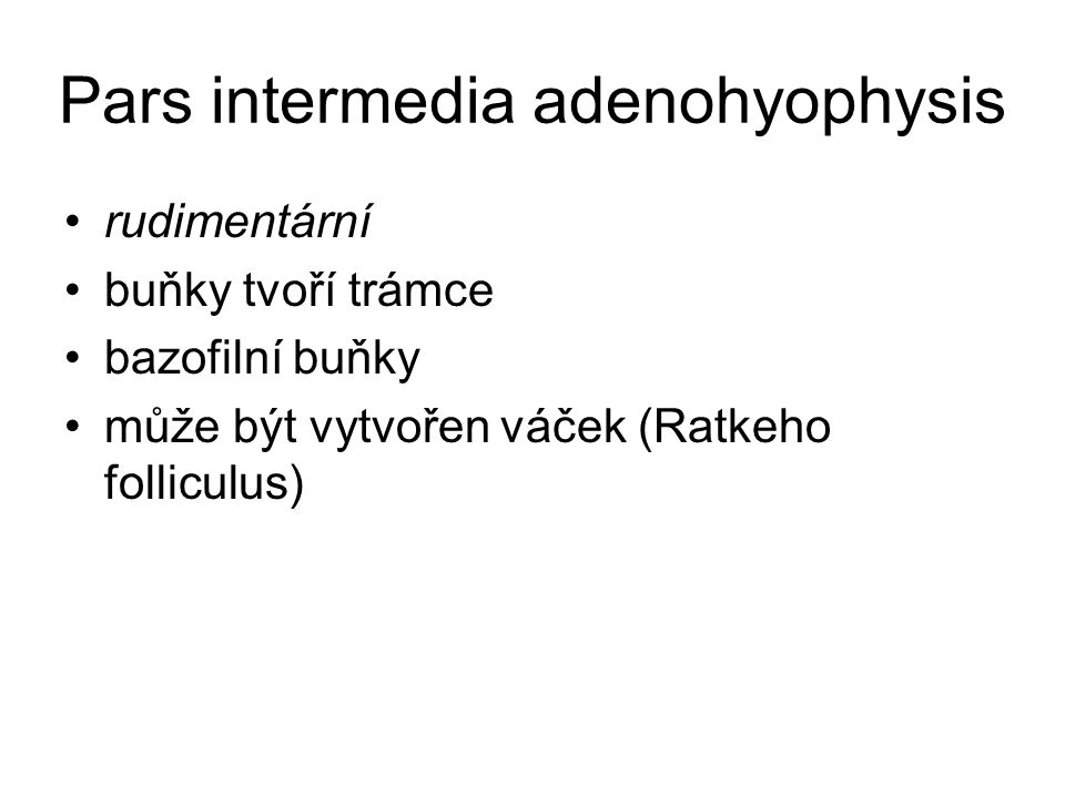 Pars intermedia adenohyophysis