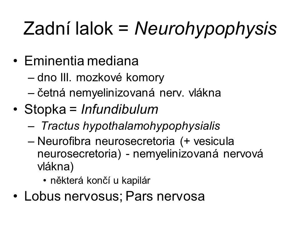 Zadní lalok = Neurohypophysis