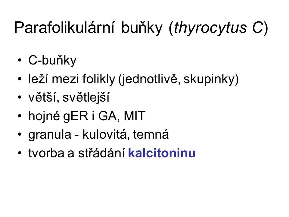 Parafolikulární buňky (thyrocytus C)