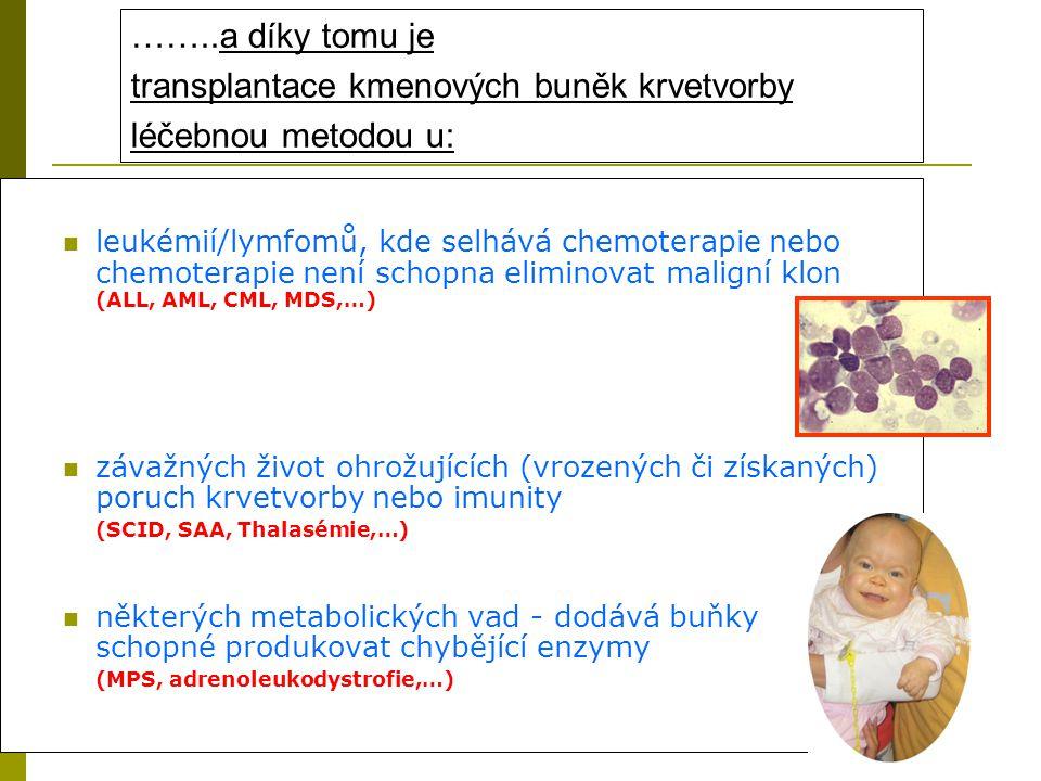 transplantace kmenových buněk krvetvorby léčebnou metodou u: