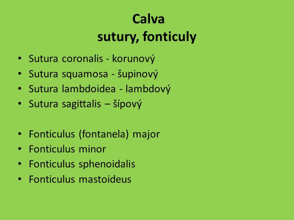 Calva sutury, fonticuly