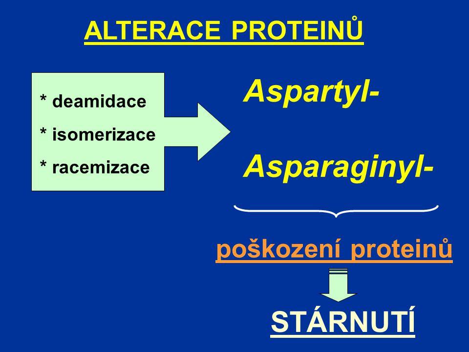 Aspartyl- Asparaginyl- STÁRNUTÍ ALTERACE PROTEINŮ poškození proteinů