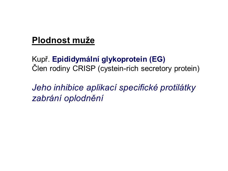 Jeho inhibice aplikací specifické protilátky zabrání oplodnění