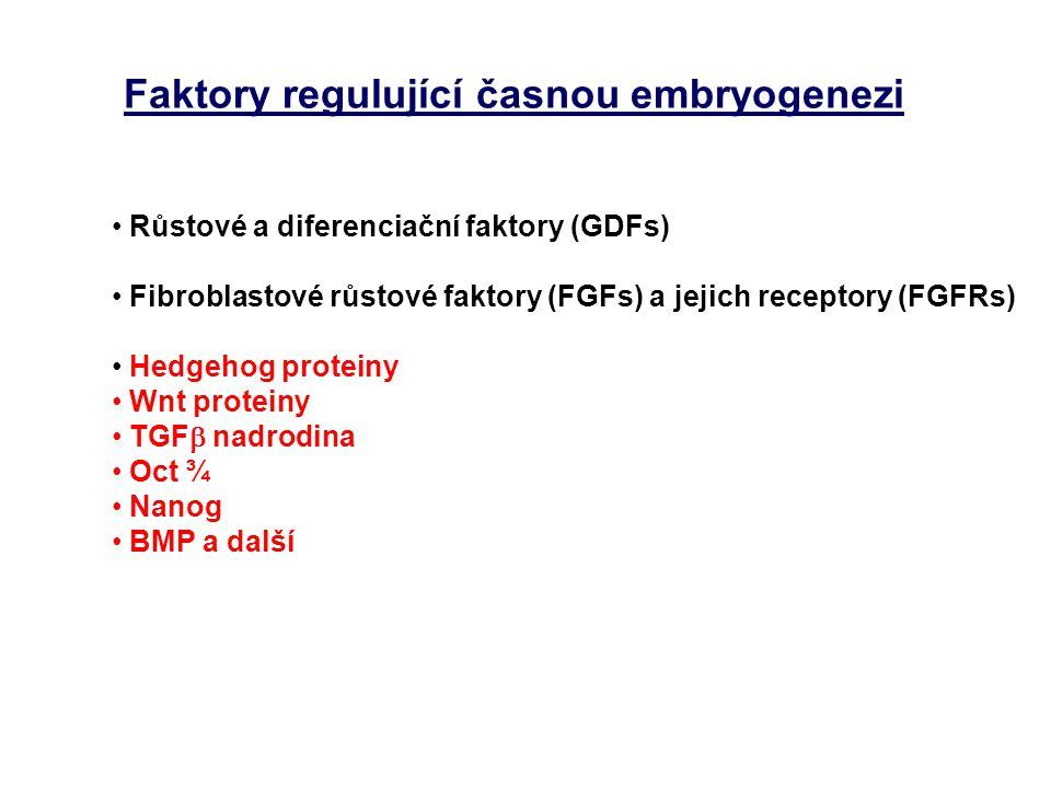 Faktory regulující časnou embryogenezi