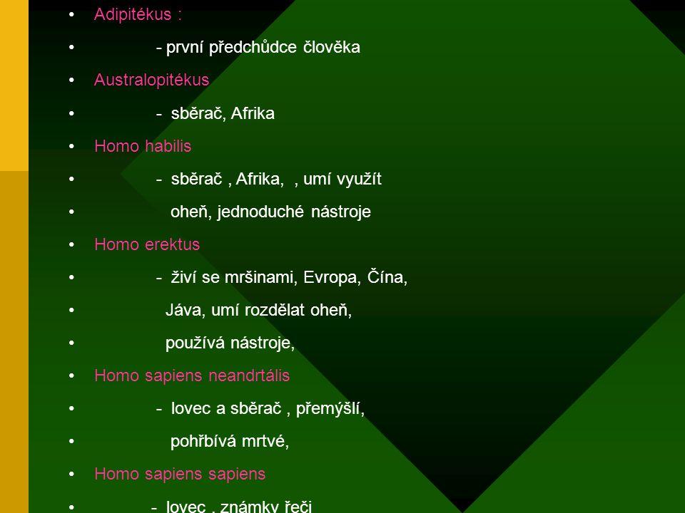 Adipitékus : - první předchůdce člověka. Australopitékus. - sběrač, Afrika. Homo habilis. - sběrač , Afrika, , umí využít.