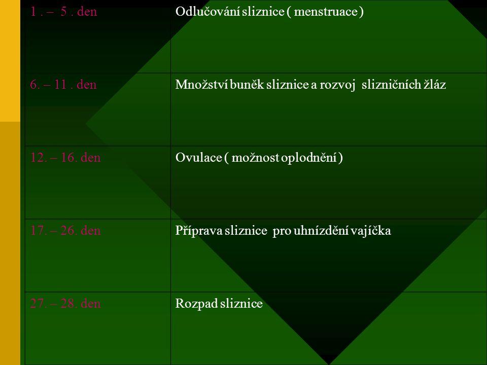 1 . – 5 . den Odlučování sliznice ( menstruace ) 6. – 11 . den. Množství buněk sliznice a rozvoj slizničních žláz.