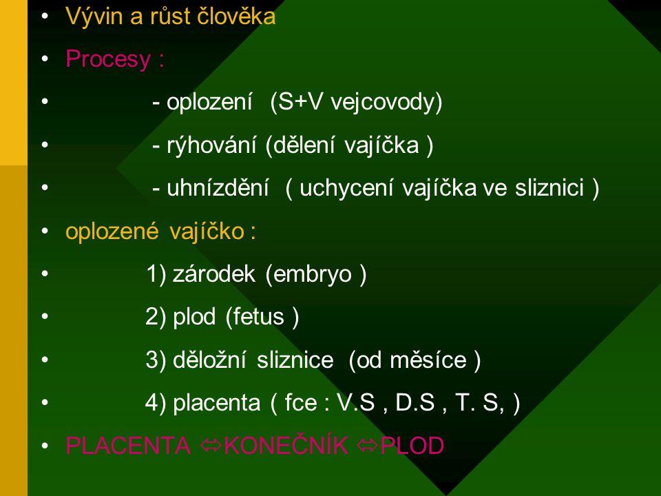 Vývin a růst člověka Procesy : - oplození (S+V vejcovody) - rýhování (dělení vajíčka ) - uhnízdění ( uchycení vajíčka ve sliznici )