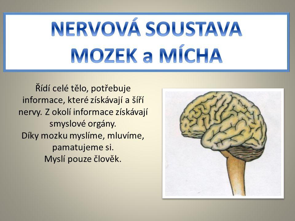 Díky mozku myslíme, mluvíme, pamatujeme si.