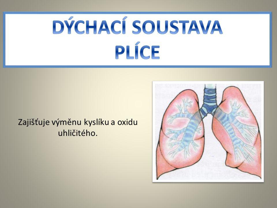 Zajišťuje výměnu kyslíku a oxidu uhličitého.