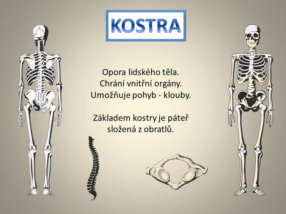 KOSTRA Opora lidského těla.